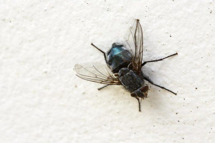 дезинфекция от мух
