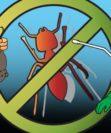 Как избавиться от тараканов различных видов
