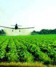 Что такое гербицидная обработка и зачем ее проводить