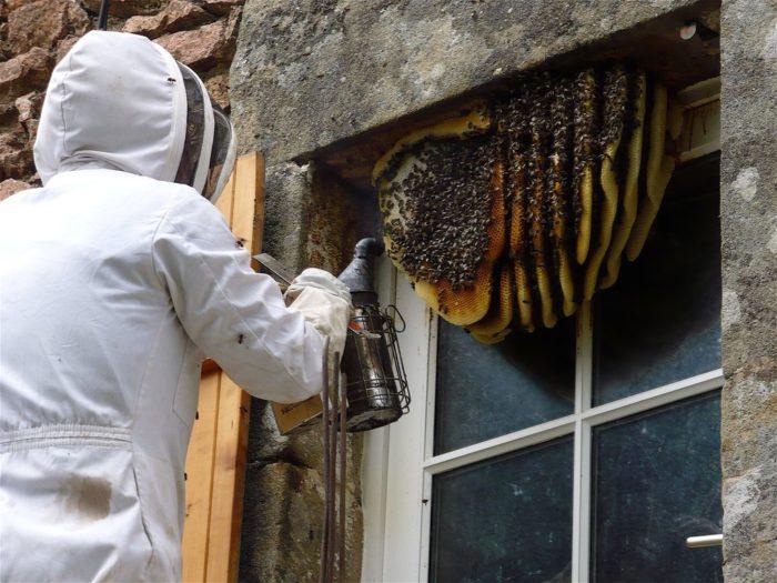 Эффективный способ избавиться от пчел в Москве и МО