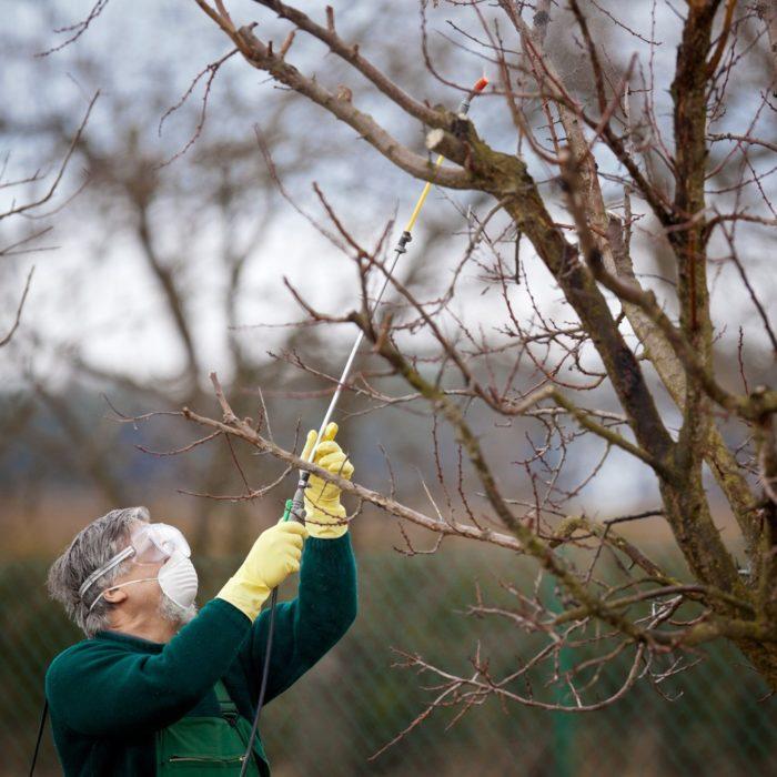 Что такое гербицидная обработка: как происходит лечение деревьев