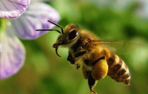 Истребление пчел на частных участках