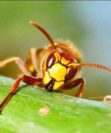 Что нужно знать об уничтожении пчел