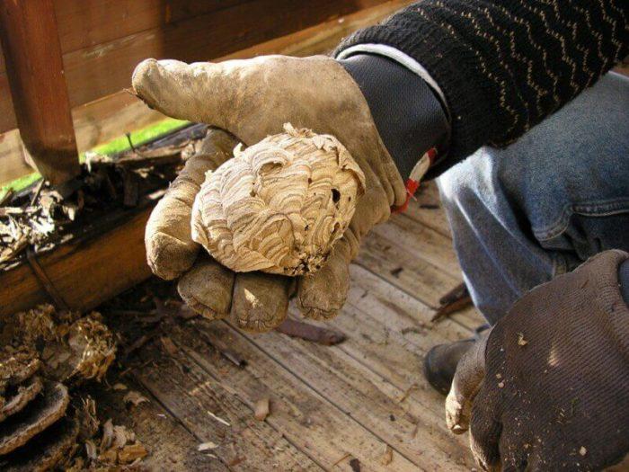 Истребление осиных ульев