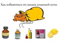 как избавиться от запаха мочи кошки