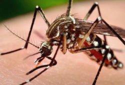 Болезни, переносимые комарами