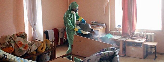 Когда нужна травля насекомых в Москве и Московской области