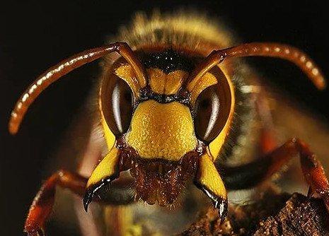 Уничтожение пчел в фурах, фургонах в СПб и ЛО
