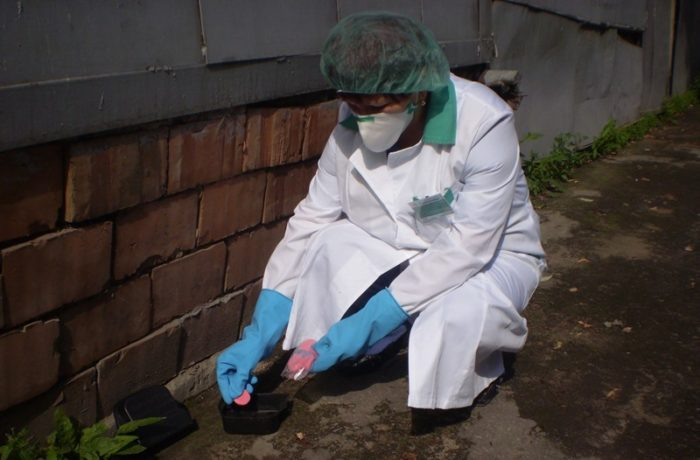Услуги СЭС против грызунов в Москве