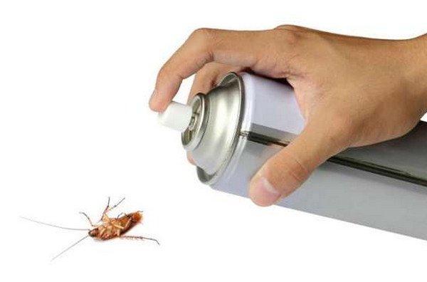 Самостоятельное истребление насекомых