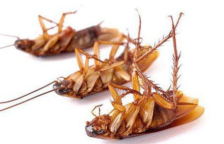 Профессиональная борьба с тараканами