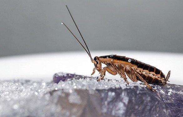 Эффективная дезинсекция тараканов в Москве