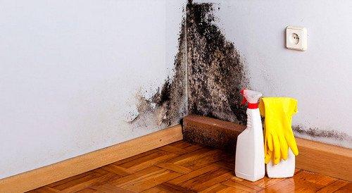 Борьба с плесенью в квартире своими руками