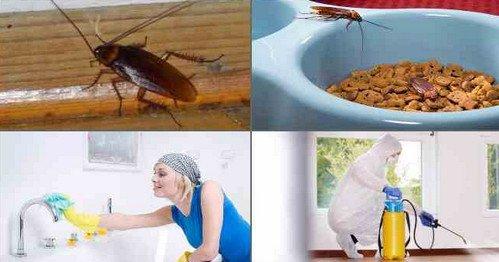Меры профилактики от тараканов в Москве и МО