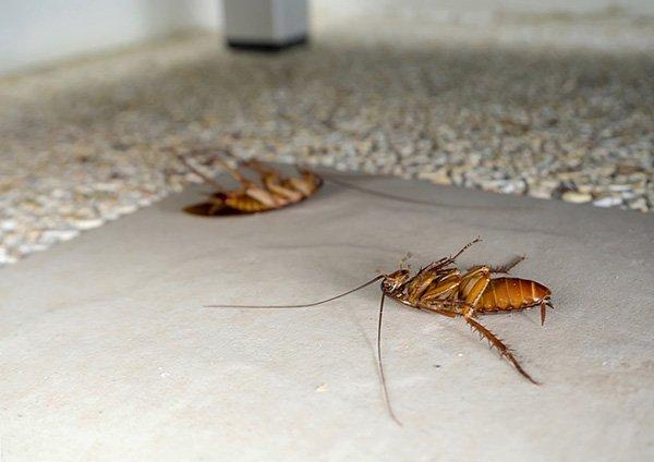 Вывести тараканов совсем непросто