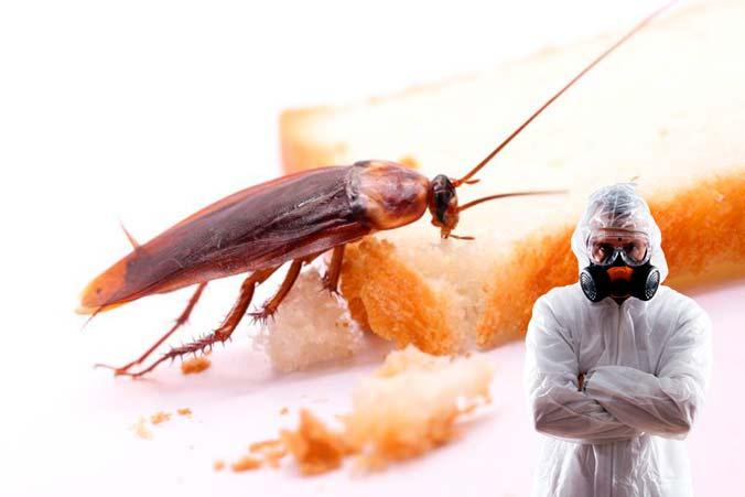 Услуги по уничтожению тараканов