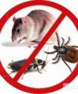 Какие паразиты могут завестись в городской квартире