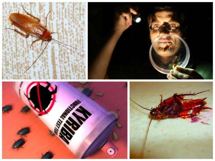 Как избавится от тараканов быстро и навсегда