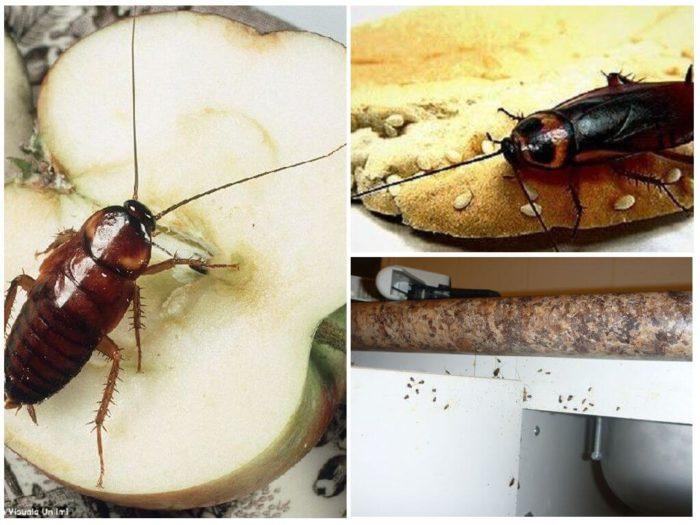 Почему в доме завелись тараканы