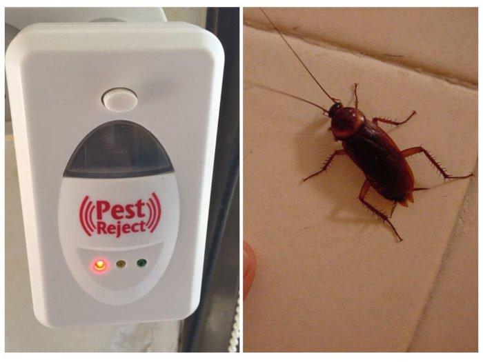 Истребление тараканов: ультразвуковые отпугиватели vs дихлофос