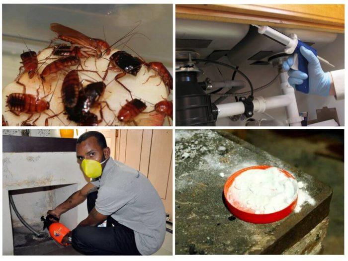 Как быстро победить тараканов: самостоятельная борьба vs профессиональная дезинсекция