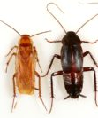 Эффективные способы избавления от домашних тараканов