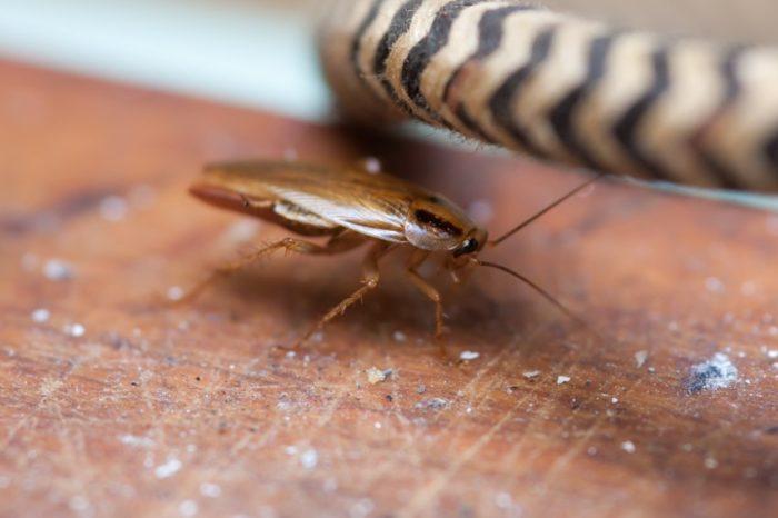 Возможные причины появления тараканов в доме и квартире