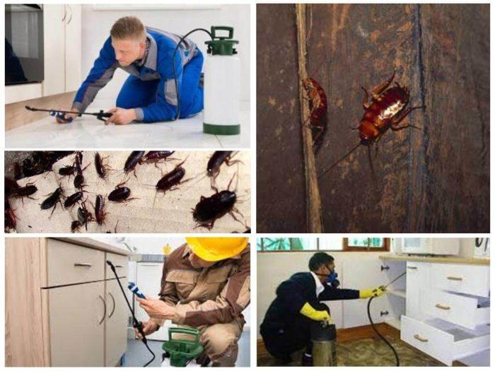 Кто должен травить тараканов в многоквартирном доме