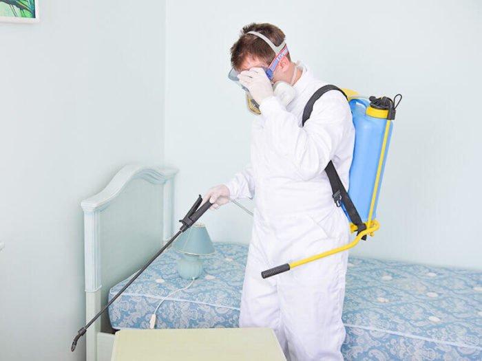 Когда необходима дезинфекция квартиры и как она проводится