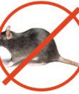 Как бороться с мышами