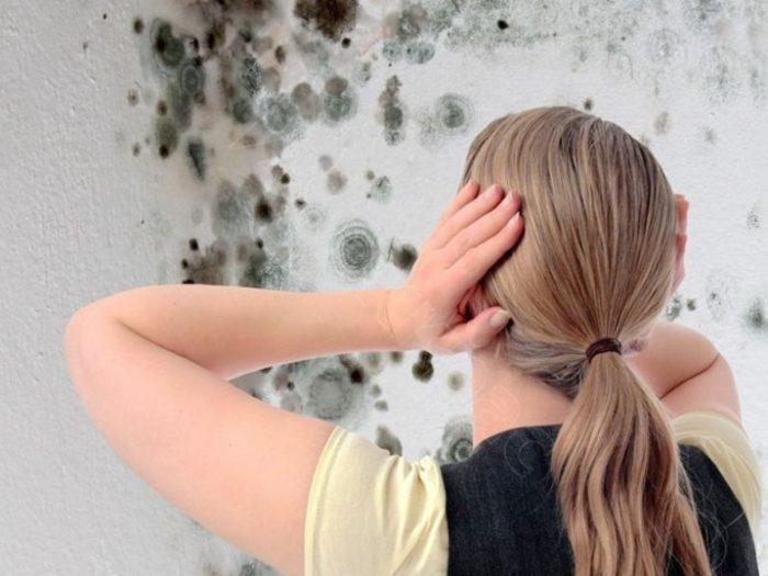 Плесень на стенах: есть решение