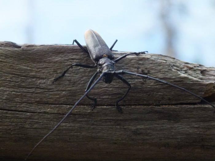 Профилактика и способы борьбы с жуком-короедом