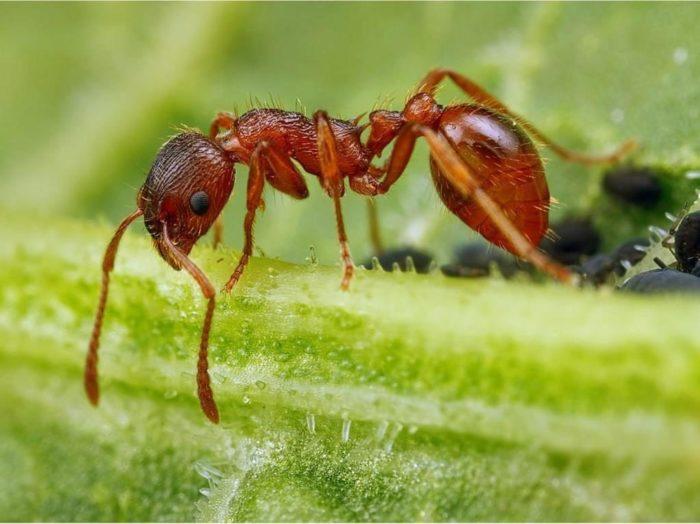 Борьба с муравьями: профилактика и методы