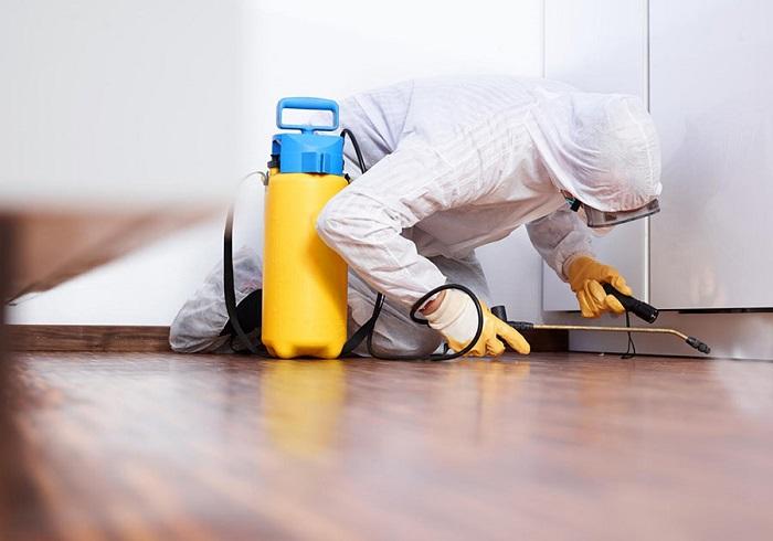Услуга очистки помещения от постельных клопов
