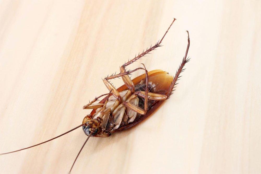 уничтожение тараканов в квартирах