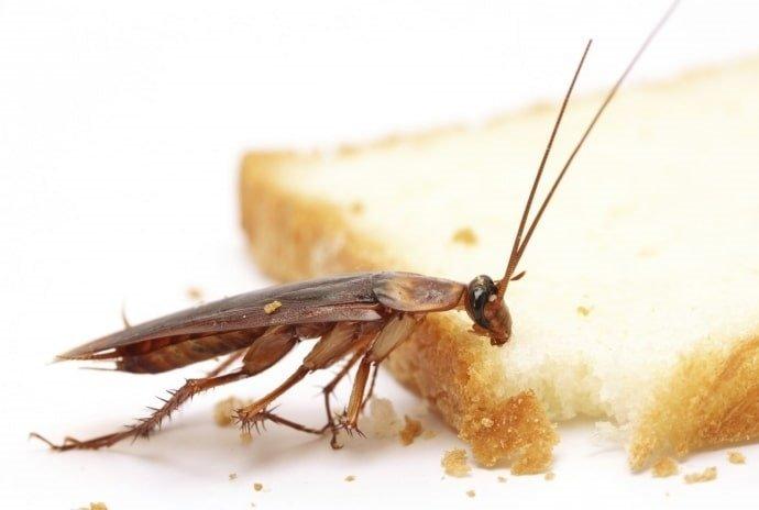 морить тараканов в квартире москва цена