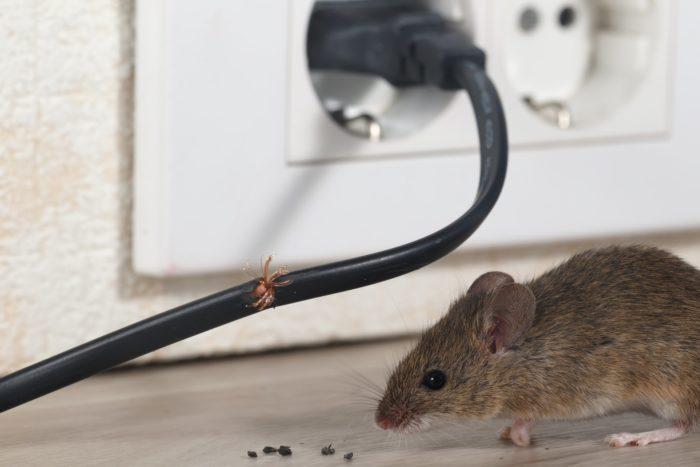 дезинфекция от мышей
