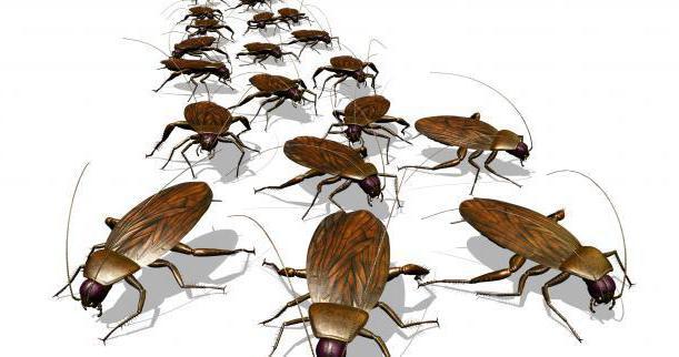 уничтожение тараканов туманом в москве