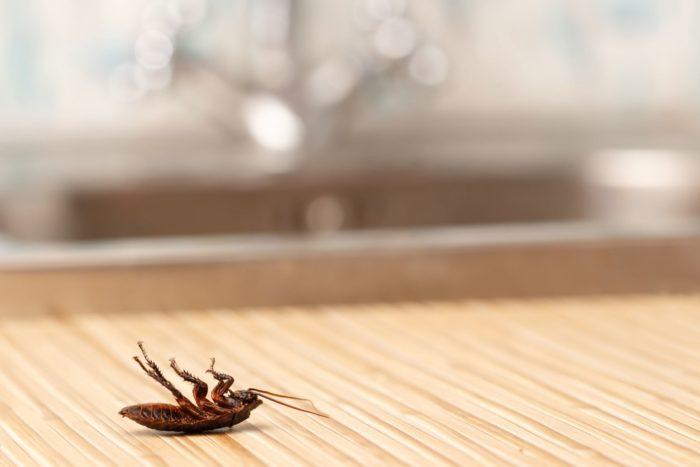 уничтожение тараканов холодным туманом в москве