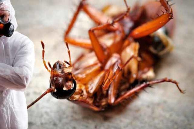 обработка от тараканов холодным туманом цена