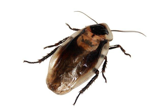 дезинфекция тараканов раменский