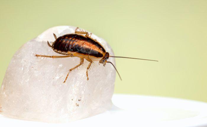 обработка от тараканов кашира