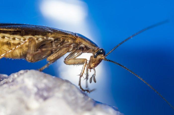уничтожение тараканов электросталь